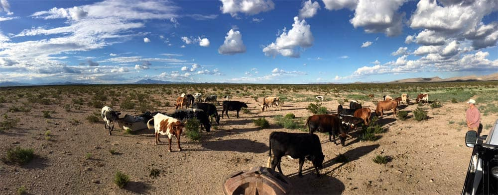 home for sale in New Mexico under big skies